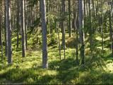 Лес,  Валка и р-он волость Каркью, Фото