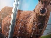 Lopkopība,  Lauksaimniecības dzīvnieki Cits, cena 33 €, Foto