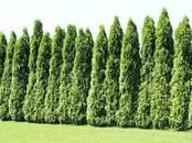 Домашние растения Садовые растения, цена 100 €, Фото