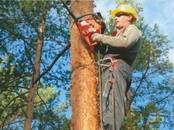 Saimniecības darbi Meža ciršana, cena 70 €, Foto