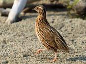 Putnkopība Aprīkojums putnu fermām, cena 35 €, Foto