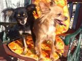 Suņi, kucēni Patversmes un viesnīcas, Foto