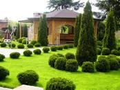 Mājas augi Dārza augi, cena 20 €, Foto