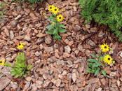 Домашние растения Садовые растения, цена 3.49 €, Фото