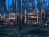 Лес,  Лудза и р-он Иснаудская вол., Фото