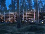 Лес,  Лудза и р-он Пасиенская вол., Фото