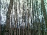 Земля и участки,  Резекне и р-он Берзгальская вол., Фото
