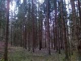 Лес,  Екабпилс и р-он Калнская вол., Фото