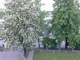 Dzīvokļi,  Rīga Centrs, cena 330 €/mēn., Foto