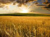 Земля и участки,  Даугавпилс и р-он Науенская вол., Фото