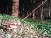 Лес,  Екабпилс и р-он Элкшинская вол., Фото