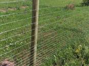 Животноводство,  Сельхоз животные Бараны, овцы, цена 32.50 €, Фото