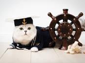 Kaķi, kaķēni Sapārošana, cena 140 €, Foto