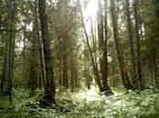 Лес,  Вентспилс и р-он Вентспилс, Фото