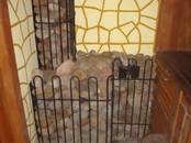 Santehnika,  Apkures aprīkojums, katli Krāsni pirtij, cena 369 €, Foto