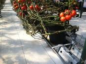 Сельское хозяйство Разное, цена 20 €, Фото