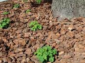 Mājas augi Zeme un mēslojumi, cena 4 €, Foto