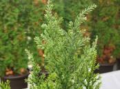 Домашние растения Уличные растения, цена 58 €, Фото