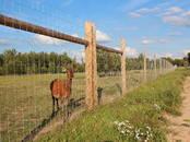Животноводство Охотохозяство, разведение диких животных, Фото