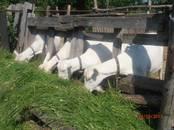 Продовольствие Молочная продукция, цена 2 €/литр, Фото