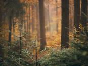 Лес,  Цесис и р-он Другое, Фото