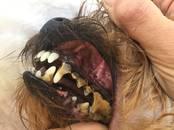 Suņi, kucēni Friziera pakalpojumi, mazgāšana, Foto