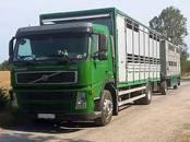 Животноводство,  Сельхоз животные Крупно-рогатый скот, цена 0.10 €, Фото
