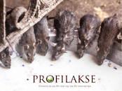 Dzīvnieki Dažādi, cena 10 €, Foto