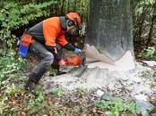 Saimniecības darbi Meža ciršana, cena 2 €, Foto
