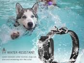 Suņi, kucēni Nodarbības, treniņi, cena 59 €, Foto