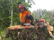 Saimniecības darbi Meža ciršana, cena 10 €, Foto