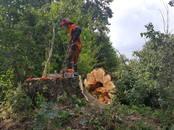 Saimniecības darbi Meža ciršana, cena 25 €, Foto