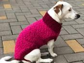 Suņi, kucēni Aksesuāri, cena 9 €, Foto