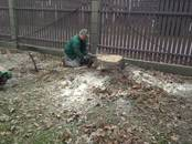 Saimniecības darbi Meža ciršana, cena 9 €, Foto