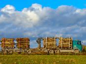 Лес,  Салдус и р-он Другое, Фото