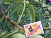 Lauksaimniecība Sēklas un stādi, cena 10 €, Foto