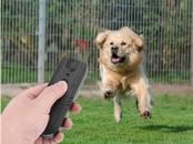 Suņi, kucēni Aksesuāri, cena 20 €, Foto