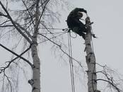 Saimniecības darbi Meža ciršana, cena 35 €, Foto