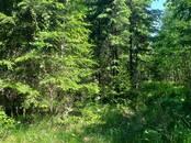 Лес,  Салдус и р-он Пампальская вол., Фото