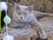 Kaķi, kaķēni Sapārošana, cena 50 €, Foto
