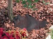 Dārza tehnika Plēve, cena 12 €/gab., Foto