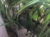 Домашние растения Средние растения, цена 8 €, Фото