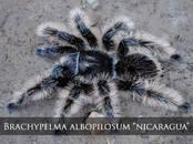 Dzīvnieki Eksotiskie dzīvnieki, cena 15 €, Foto