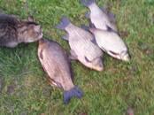 Medības, zveja Makšķerēšanas vietas, cena 15 €, Foto