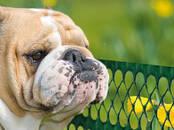Suņi, kucēni Dažādi, cena 15 €, Foto