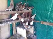 Птицеводство Куры, цена 10 €, Фото