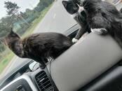 Kravu un pasažieru pārvadājumi Dzīvnieku transportēšana, cena 80 €, Foto