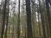 Mežs,  Tukums un raj. Tukums, Foto