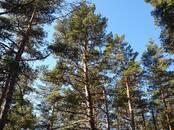 Mežs,  Ventspils un raj. Ventspils, Foto
