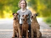 Собаки, щенки Занятия, тренировки, цена 20 €, Фото